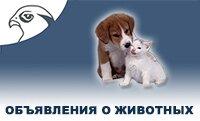 Объявления животные Сокол Вологда