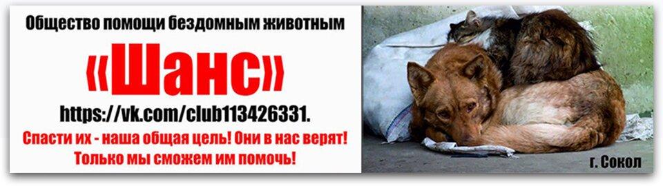 помощь бездомным животным Шанс